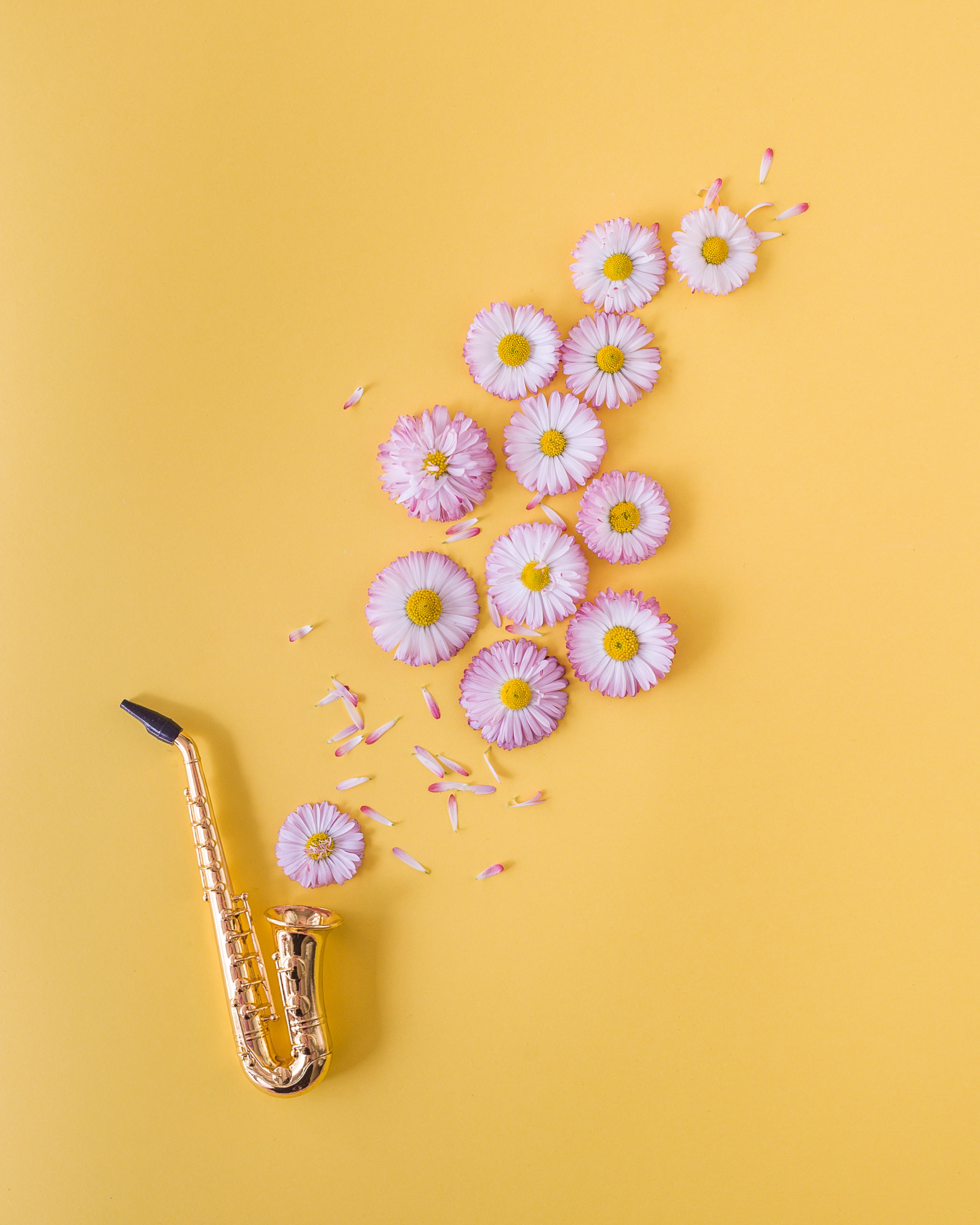 Little golden saxophone and pink daisies on orange background. Postcard concept. Minimalism, soft focus, place for text, close up.